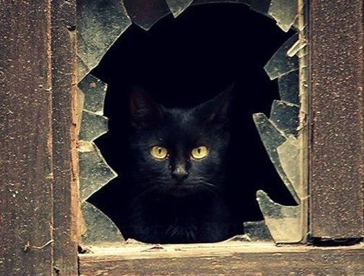 A Energia dos Gatos é unica!!!